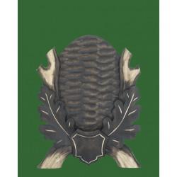 Prelov štítek srnčí pro seřízlou lebku - 16x19cm